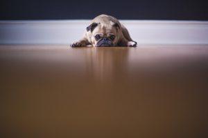 Pet Move Blog post pic